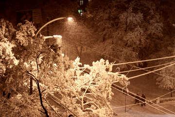 Conficcato nella neve i rami degli alberi №3479