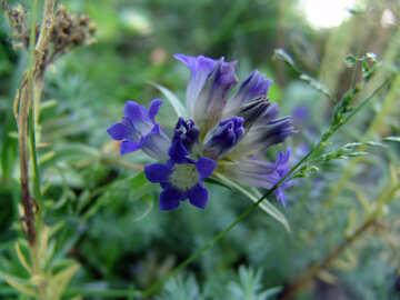 Blue flower blue flower flower  №3198