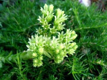 Flower rejuvenated  №3212
