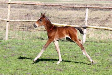 Small foal №3387