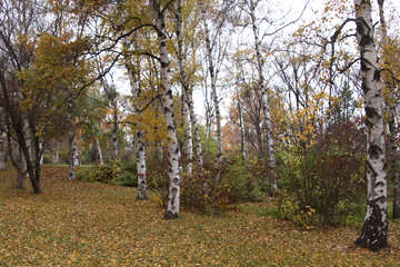 Autumn forest  №3361