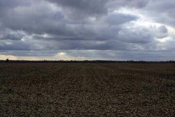 Field of topsoil. №3530