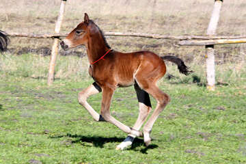 Funny horse №3386