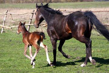Have run horse №3397