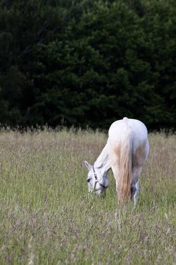 Horse grazing №3262