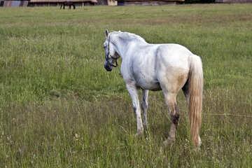 Grazing horses  №3265