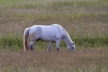 Horse grazing in the meadow №3270