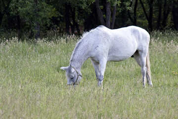 White spotted horse  №3268