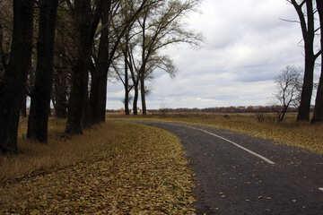 Strada in autunno №3494