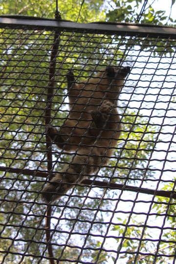In zoo №3075