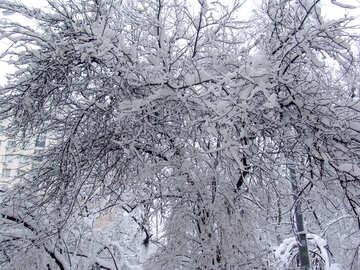 Snow tree  №3449