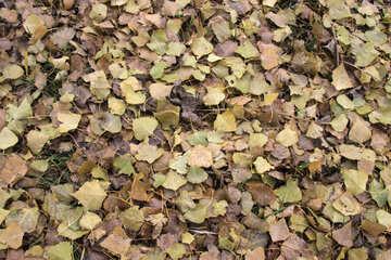 El otoño. Las hojas en la tierra. La textura. №3531