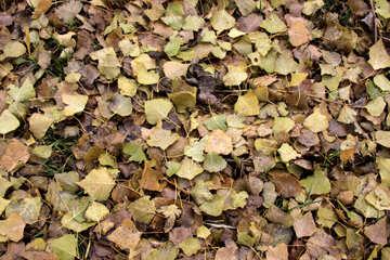 Beschaffenheit: Herbst Blätter  №3532