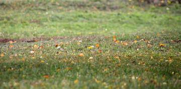 Texture. Autumn leaves on grass  №3377