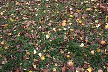 welken Blätter auf dem Gras. . №3374