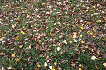 Gelb Blätter Gras Beschaffenheit . №3375