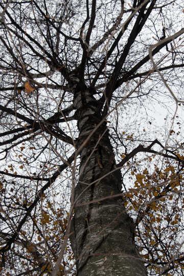Autumn  tree №3354