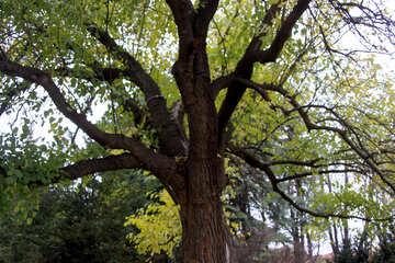 Autumn tree  №3318