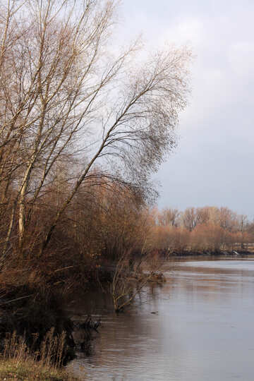 The shore of the river in autumn №3501