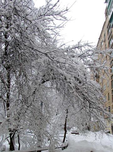 Iarda nella neve №3446