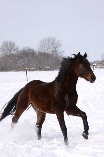 Horse in the snow №3977