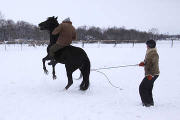 Конь зимой без седла №3955