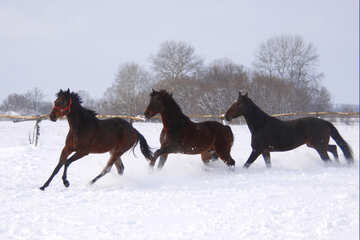 Horses running in the snow №3980