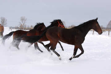 Horses run on snow №3979