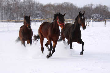 Three horses in the snow №3981