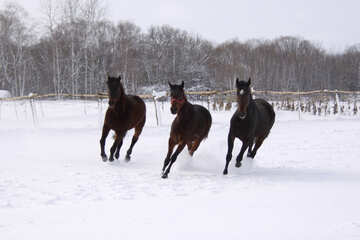 Three horses in the snow №3982