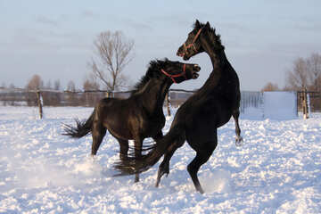 Games horses in the snow №3963