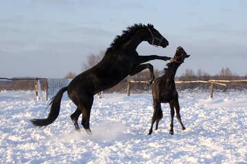 Quarrel horses №3960