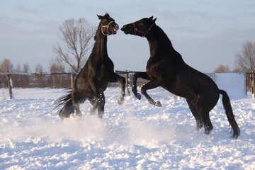 Raging stallions №3965