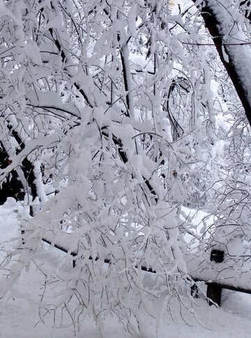 Snowfall  №3443