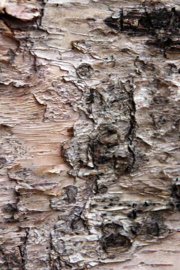 Texture. Birch bark  №3351
