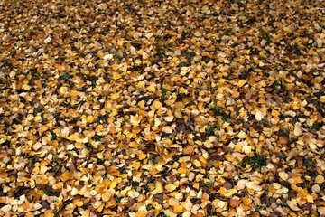 Texturen. Gelbe Blätter  №3338