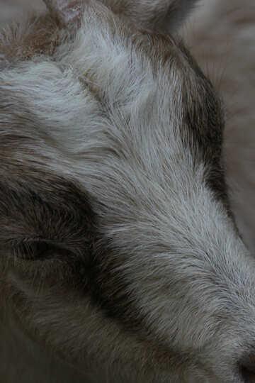 Wool  №3076