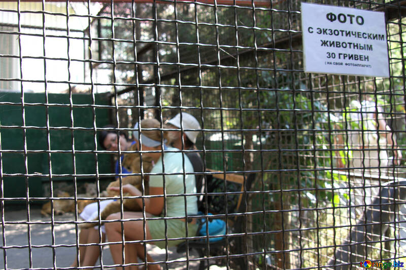 Humiliation of animals in zoos (photo with animals animals ) №3082