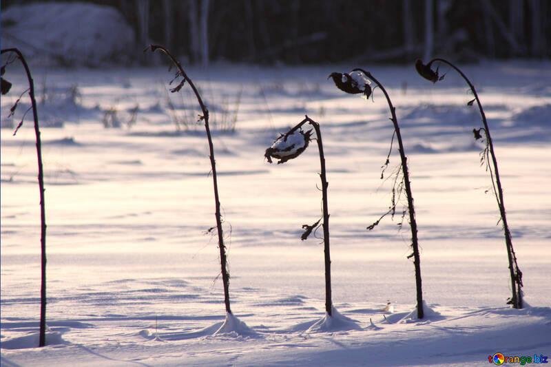 Kitchen garden in the winter №3994