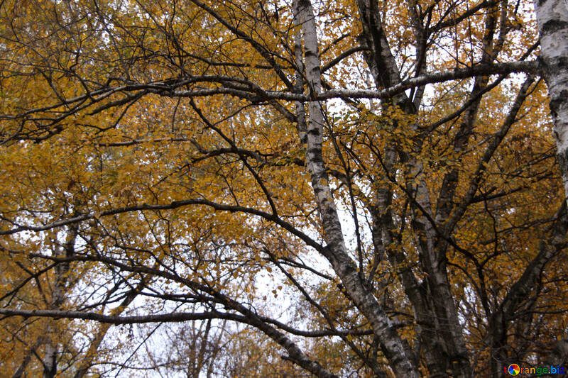 sky in the autumn forest  №3350