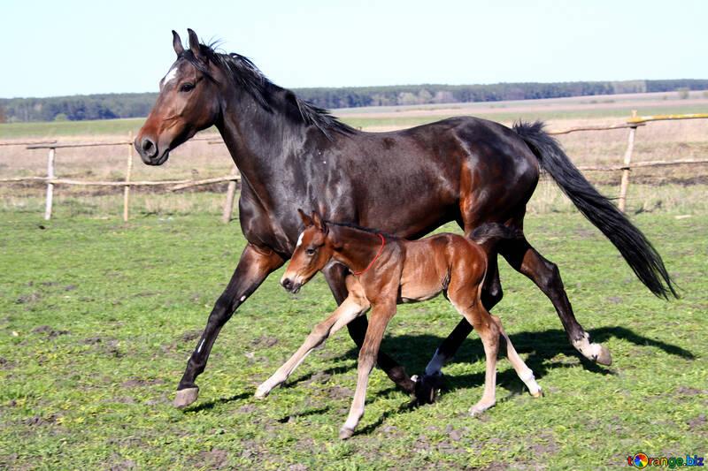 Learn horse to run №3393