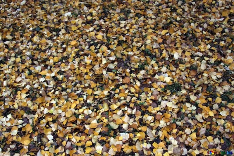 Texture. Autumn leaves . №3337