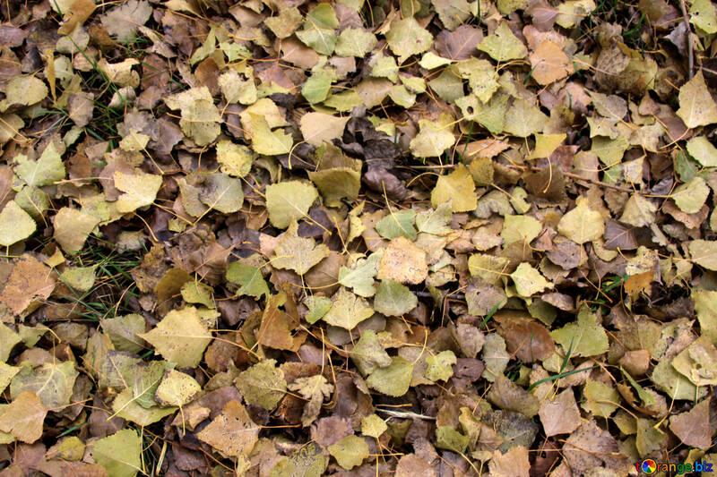 Texture: Autumn leaves   №3532