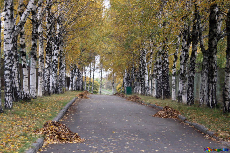 Heaps of leaves on the track  №3368