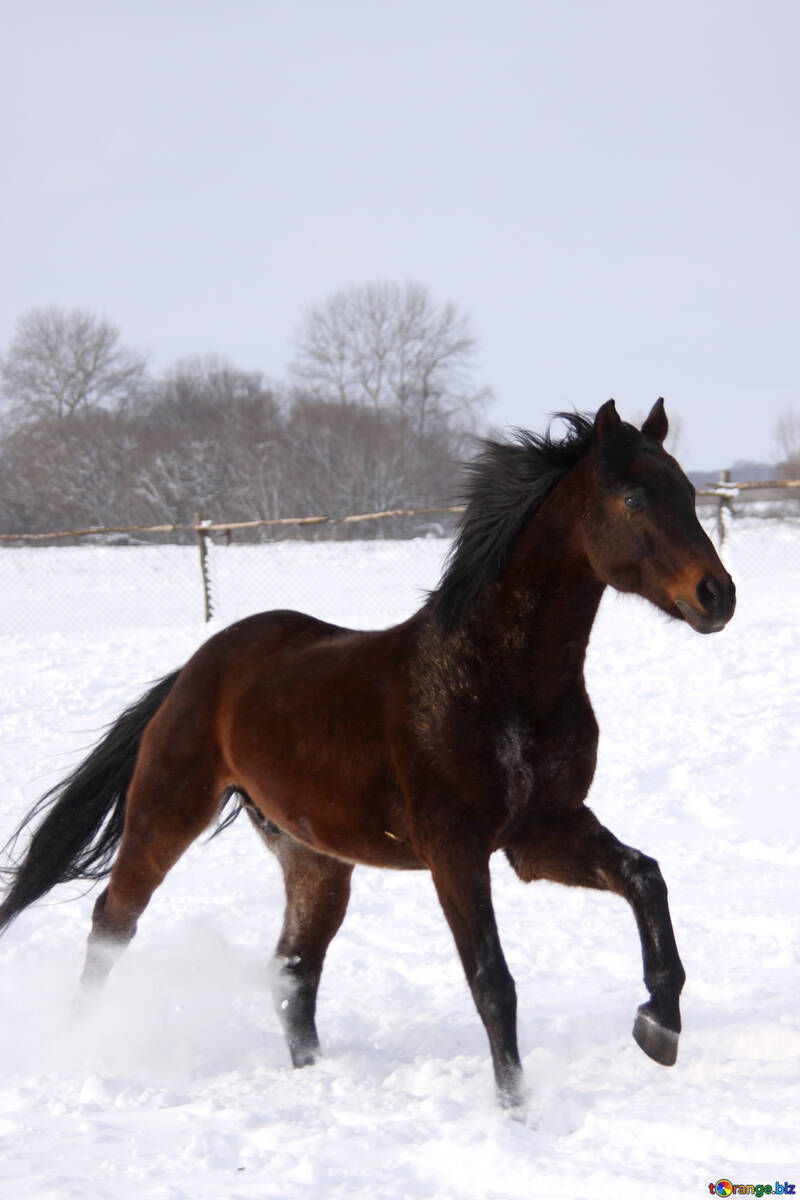 Лошадь на снегу №3977