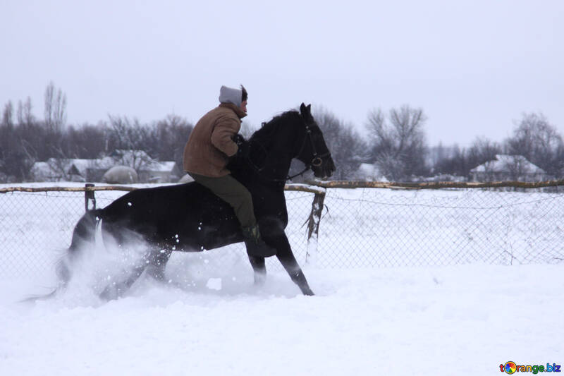 Rider on horse without saddle in the snow №3956