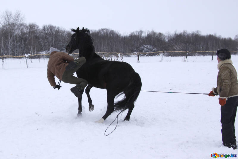 Man falls from horse in the snow №3953