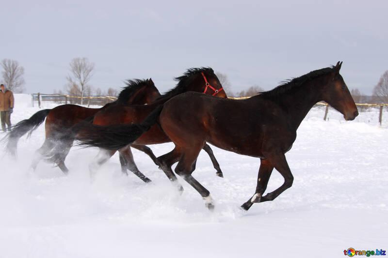 Caballos corriendo en la nieve №3979