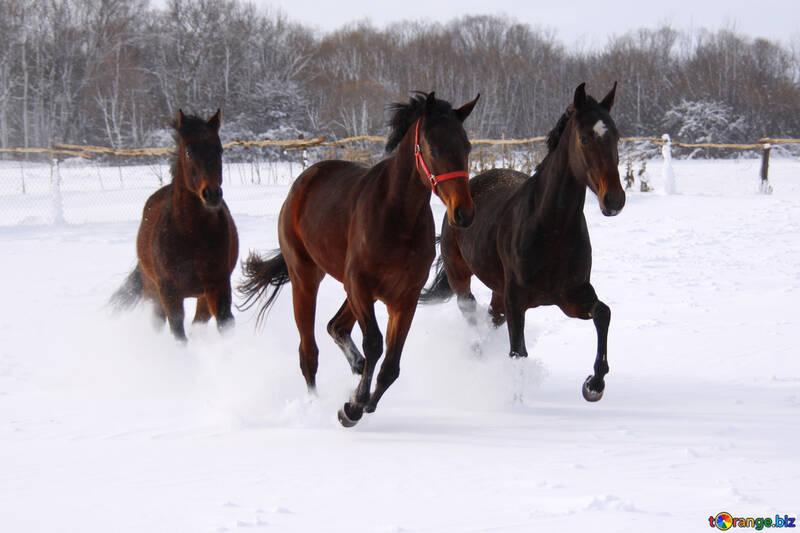 Three horses in the snow №3981