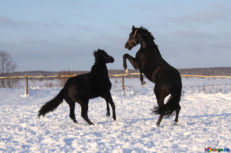 Games play horses in the snow №3968
